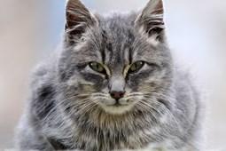 internetsko druženje za ljubitelje mačaka izlazak iz djevojke mješovite rase