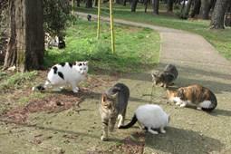 Galerija mladih uskih maca